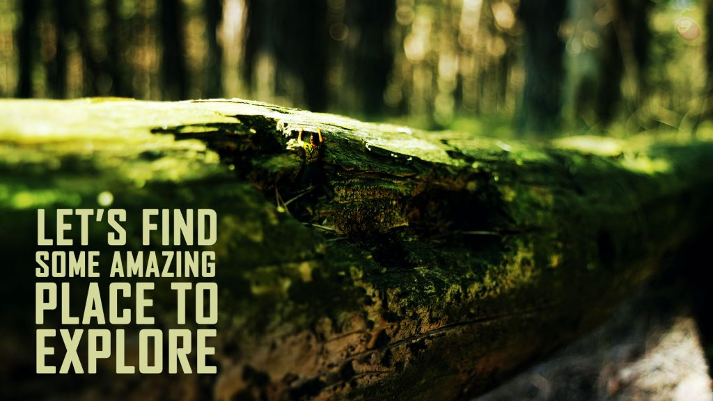 Motivational quote. Man in the foret hanging on a gigantic fallen tree.