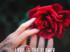 Love quote. Young and old women holding the same red rose blossom.