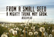 Inspirational Quote. A field full of sow thistle and it's seeds.