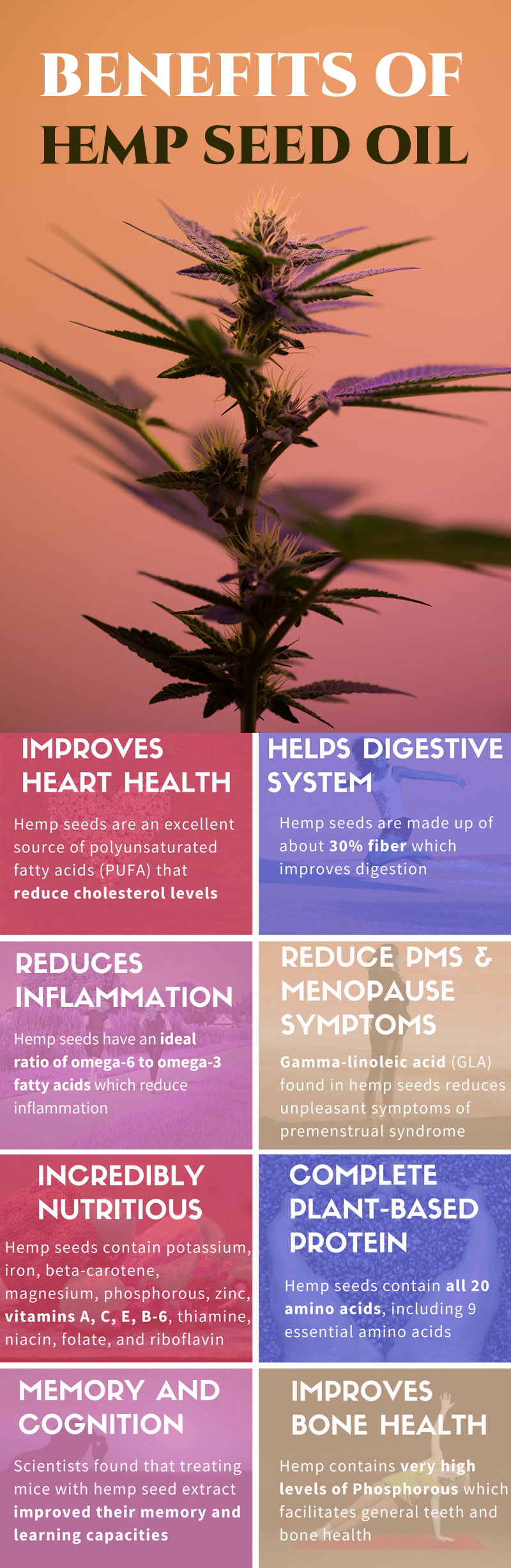 hemp-seed-oil-Infographic.