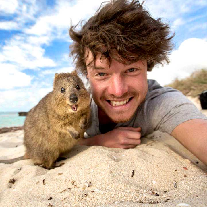 funny-selfie-with-animals-allan-dixon-quokka-beach