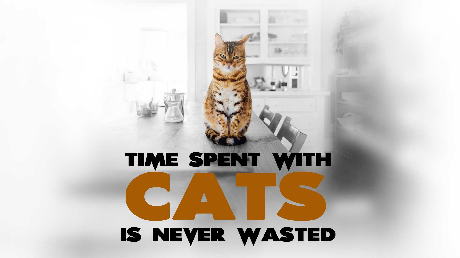 Time-spent-with-cats-is-never-wasted-funny-cat-quote