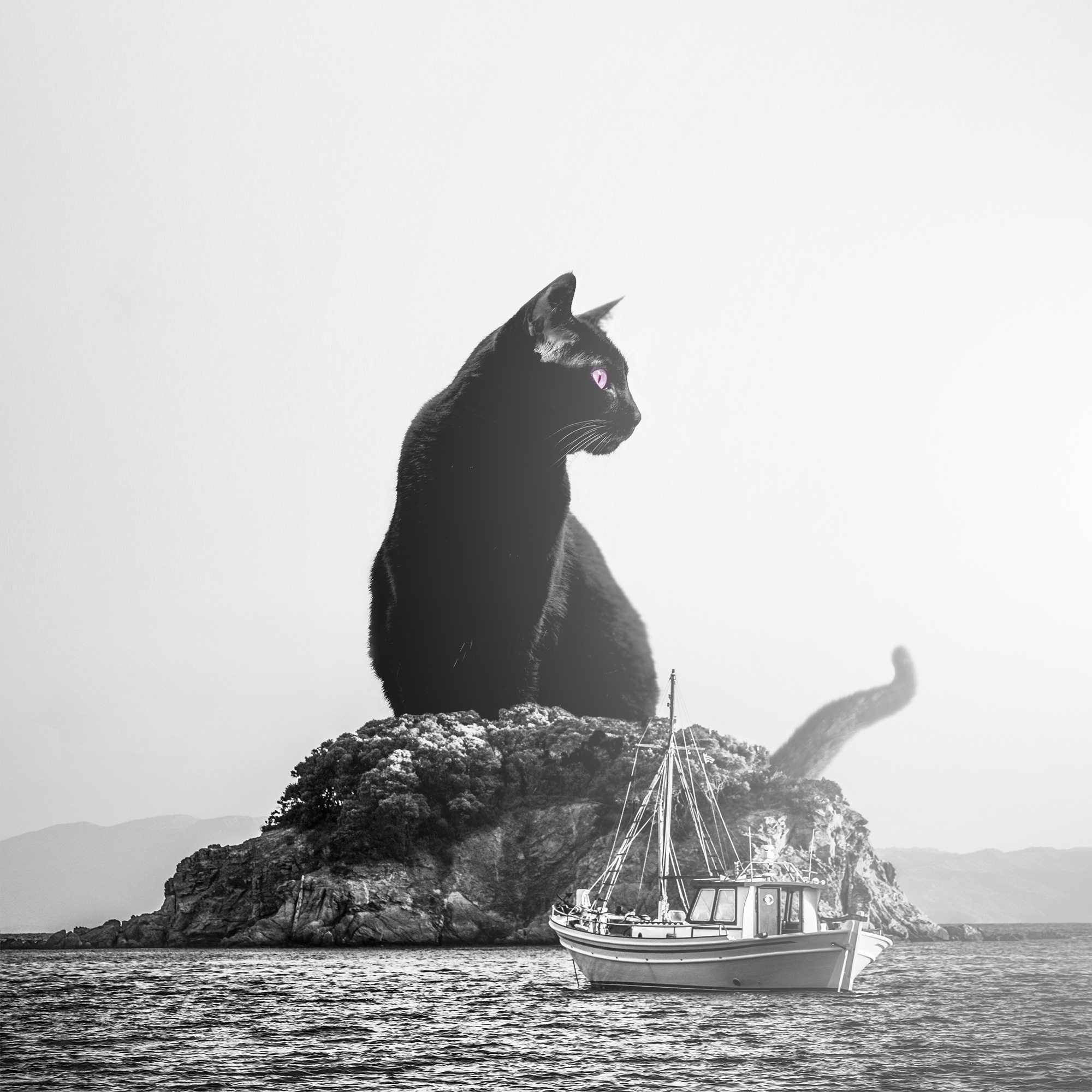 gigantic black cat on the small island surreal photography