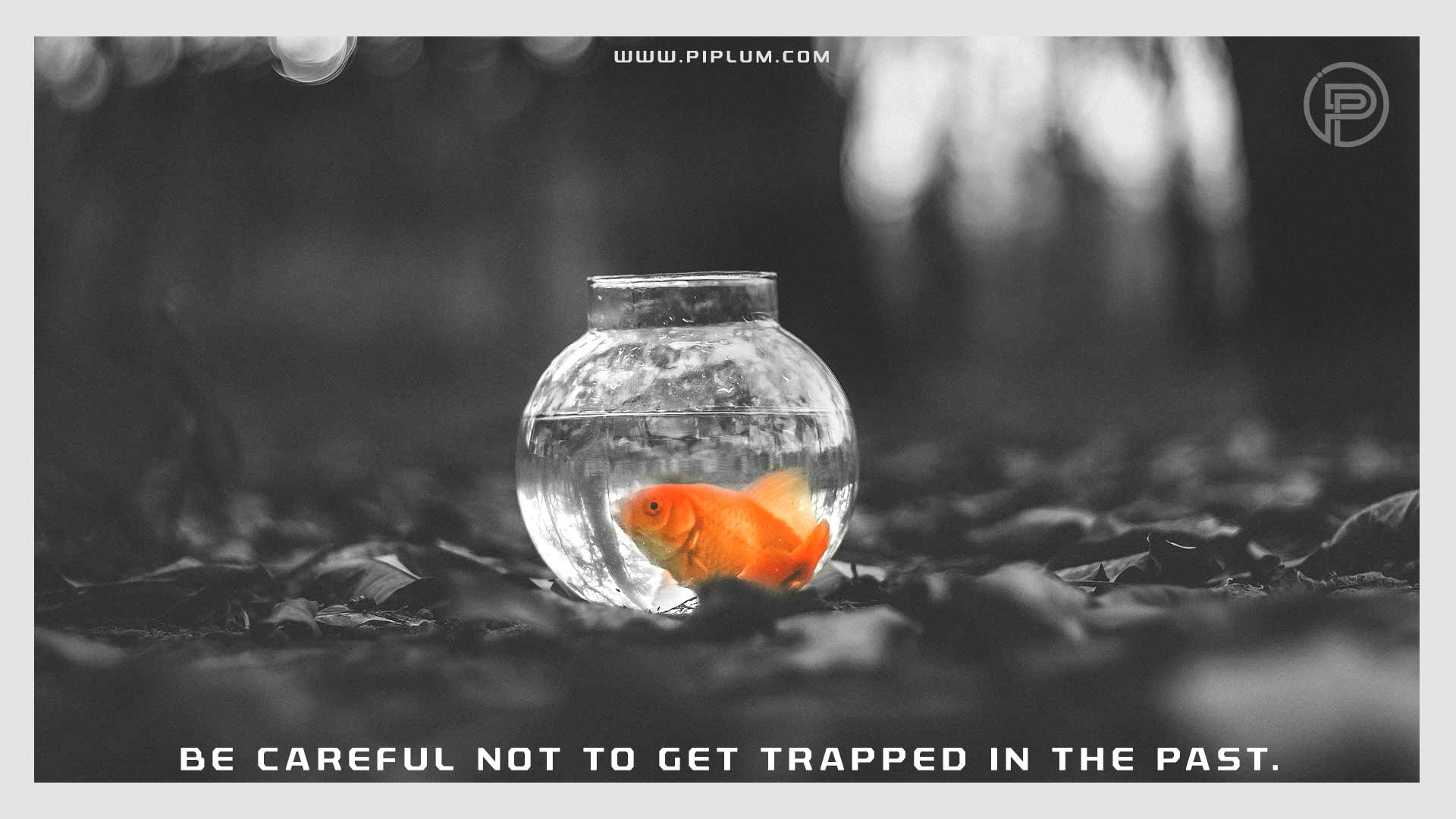 Be-careful-not-to-get-trapped-in-the-past-Coronavirus-will-not-last-forever-Motivational-COVID-19-quote-fish