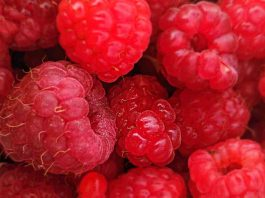 Raspberry oil features